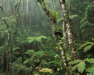 ws_Montane_Rainforest_1280x1024