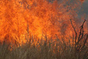 300x200xkruger-park-fire_7031-300x200.jpg.pagespeed.ic.iNooMRurMm
